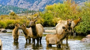 Enjoy the Wildlife in the Rocky Mountains